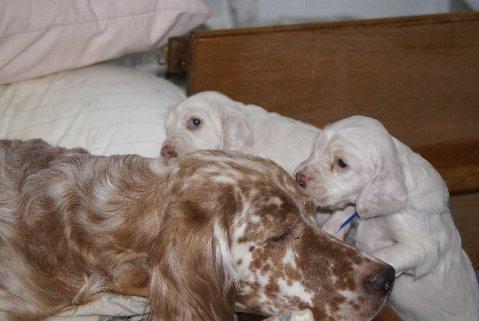 Winnie Wee Pups