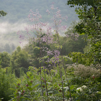 Flower Hill Farm Lavender Mist