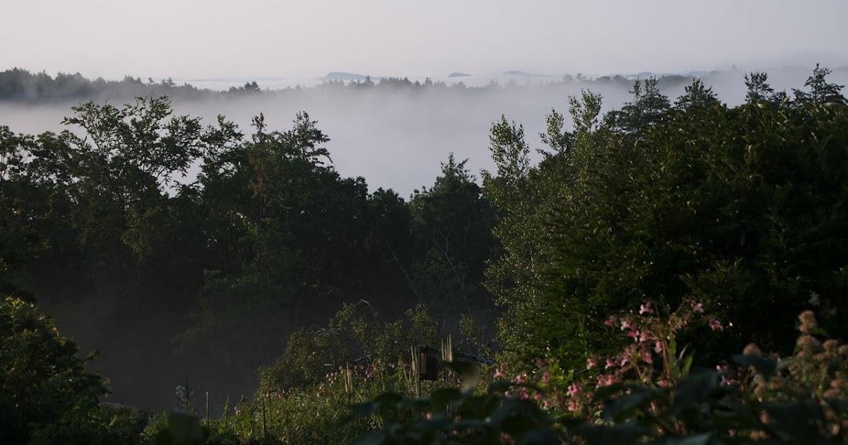 Flower hill farm lavender mist for Flower hill farms