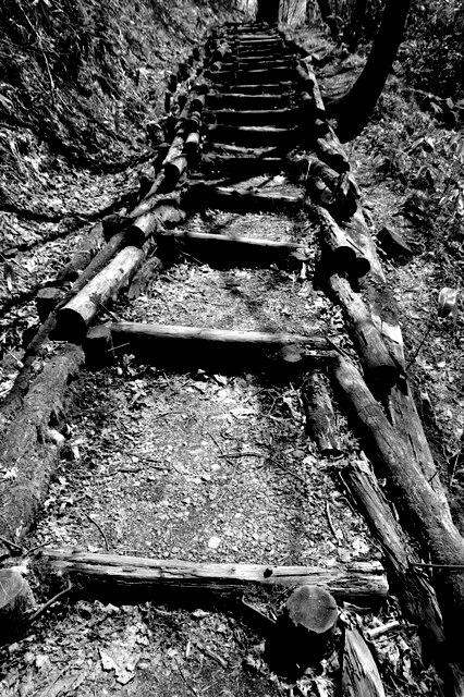 林道の小坂