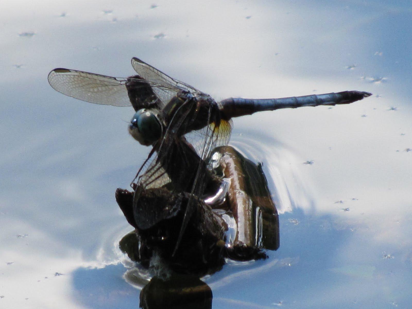 Celestial Ramblings: hic sunt dracones (HERE BE DRAGONS!)