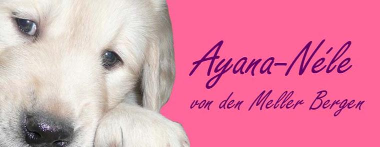 Ayana-Nele von den Meller Bergen