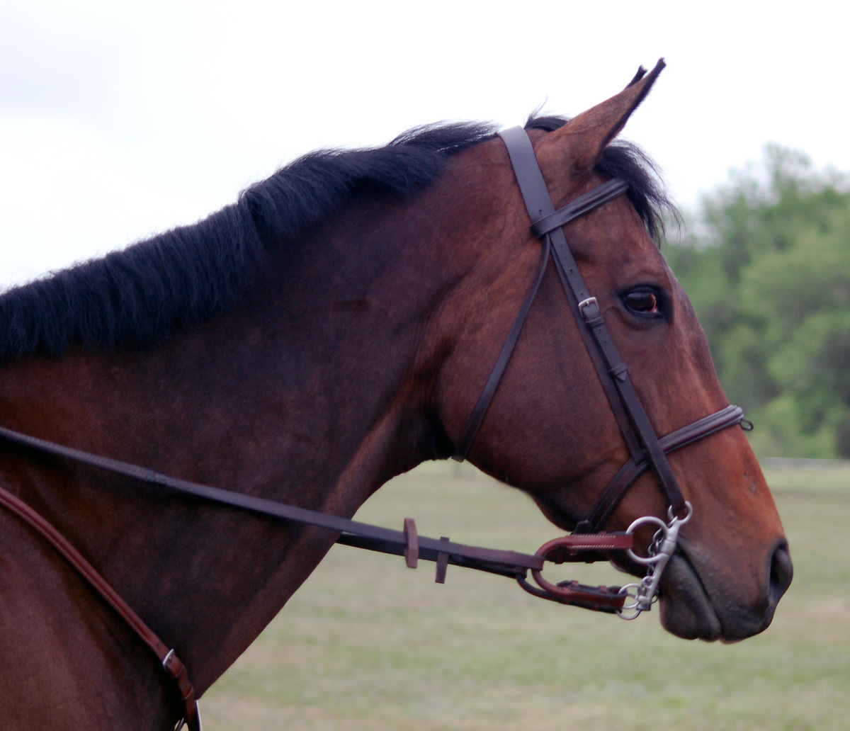 Braymere custom saddlery eventing bridles part two for The pelham