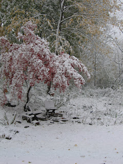 View of the garden in winter.