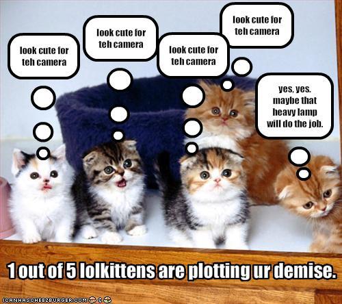 cats pasing single party böblingen