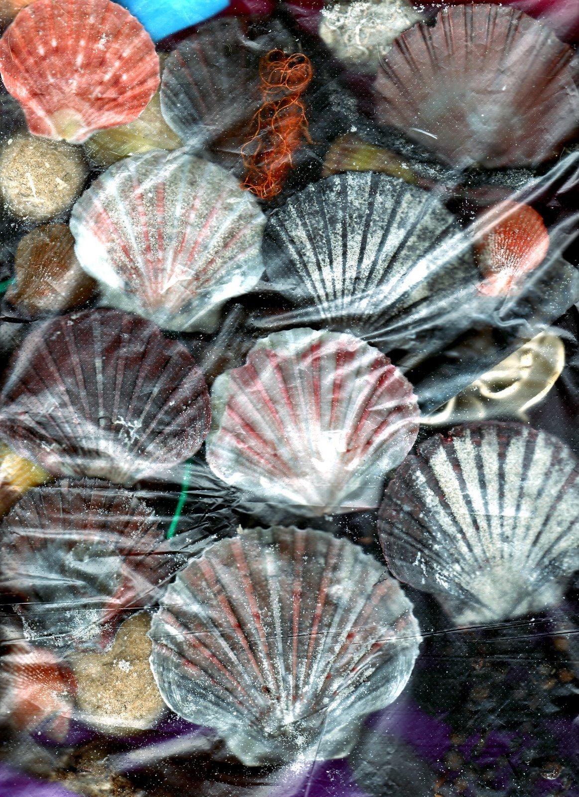 [feast_shells2]