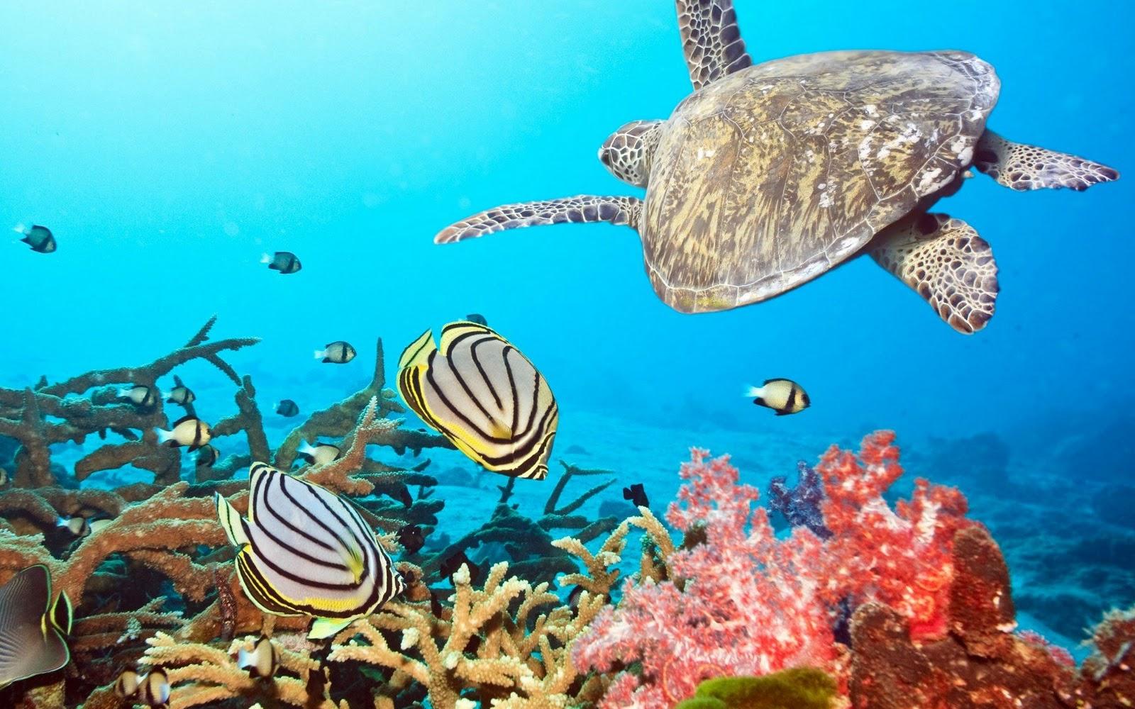 Ocean Plants Fish Underwater Wallpaper Screensaver Image Source From This