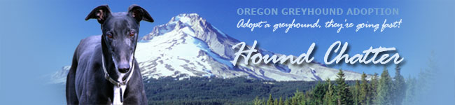 Oregon Greyhound Adoption Hound Chatter