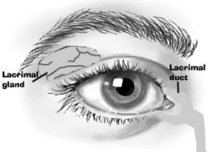 Lasik Profiling On The Corneas