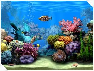 aquarium eau douce mer poisson