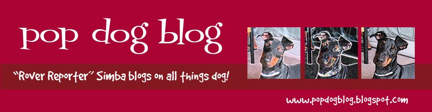 pop dog blog