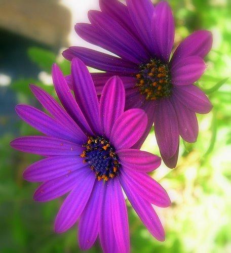 [floretes]