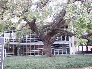 haunted tree in Houston tx