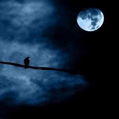 Noche+con+p%C3%A1jaro.jpg