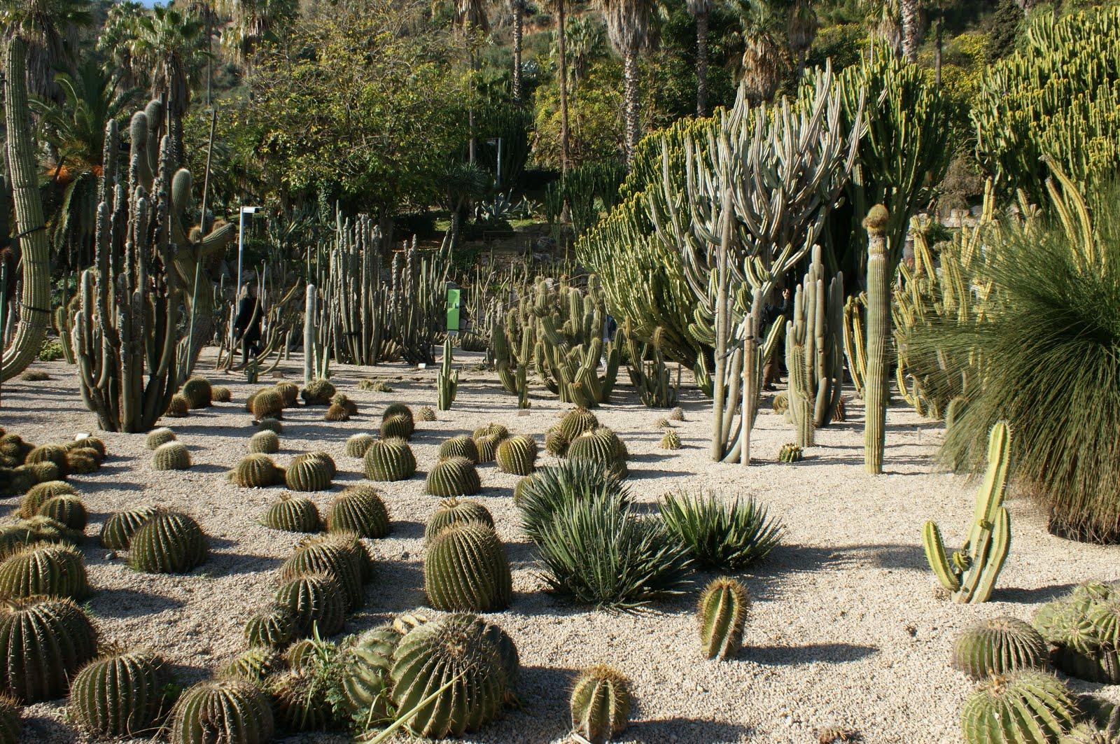 Jardines de cactus y suculentas reapertura del mossen for Jardines con cactus