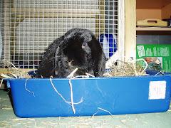 Alvin Bunny