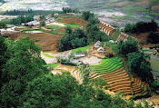 Hill rice field in Sapa