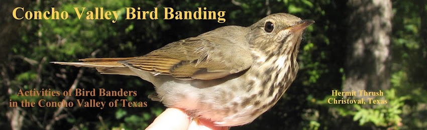 Concho Valley Bird Banding