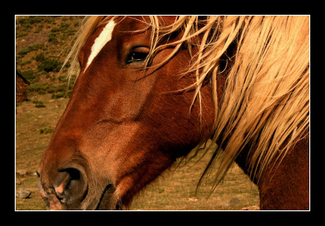 cavalll a la tardor