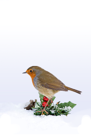 Original Text and Images Property of Privet and Holly
