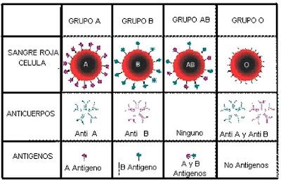 grupos sanguineos y alimentacion: