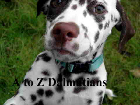 A to Z Dalmatians