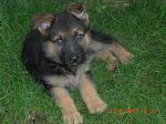 Il primo cucciolo di casa