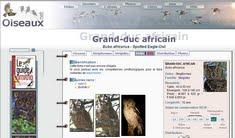 http://www.oiseaux.net/oiseaux/grand-duc.africain.html