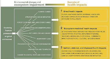 Ecosystem - health impacts