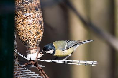 Tenere al caldo in casa costruire una casetta in legno - Casette per uccellini da costruire ...