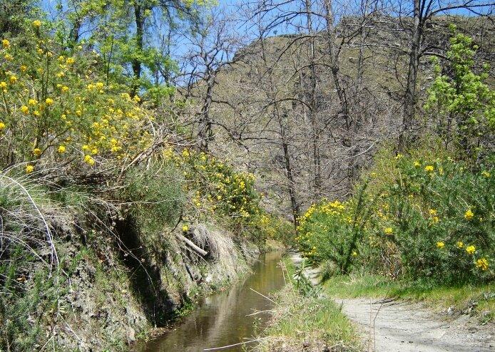 Adenocarpus Decorticans along the ´Acequia Baja´ of Mecina Bombarón - foto: casa rural El Paraje