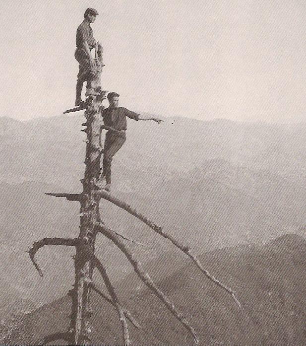 [John+Bagley+treetop.jpg]