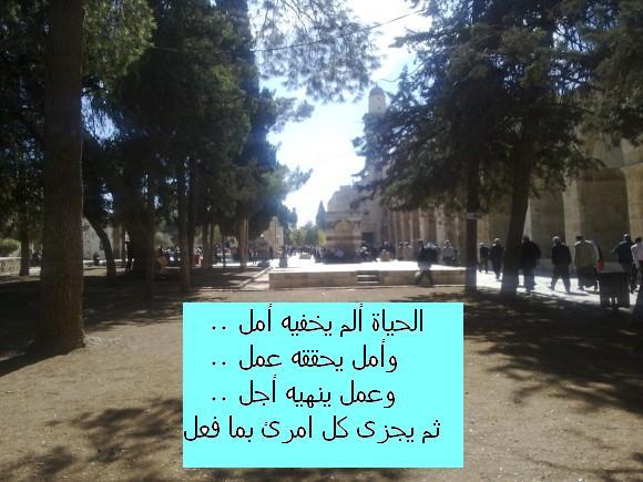 د. محمد عبد رب النبي محمد ...  Mohamed Abdel-Naby  MBBCh, MSc, FRCS, PhD