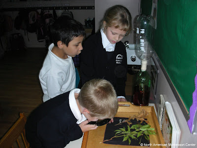NAMC montessori parent teacher communication education children dissect leaves