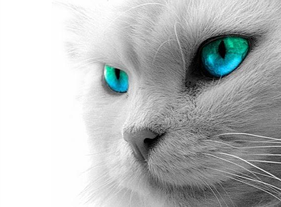 Cerco gatto in regalo a pavia gliannunci for Cerco divano in regalo milano