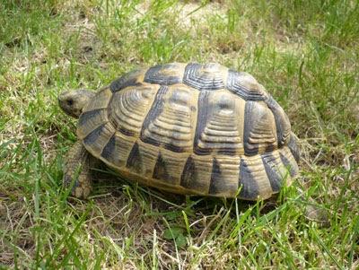 Cerco acquario rettilario e lampade per tartaruga gliannunci for Cerco acquario per tartarughe usato