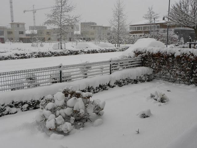 Sneeuw Zoetermeer