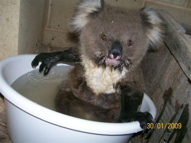 [koala6.htm]
