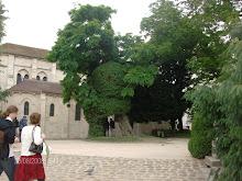 A arvore mais velha de Paris.Jardim de Saint Julien le Pauvre