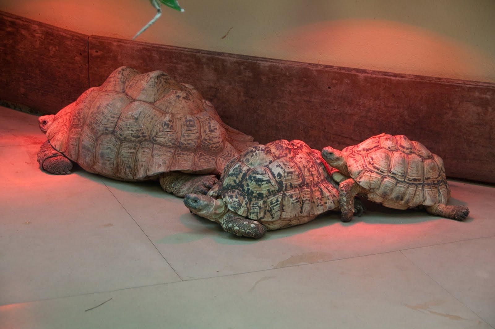 marys land turtles adventures in turtlesitting. Black Bedroom Furniture Sets. Home Design Ideas
