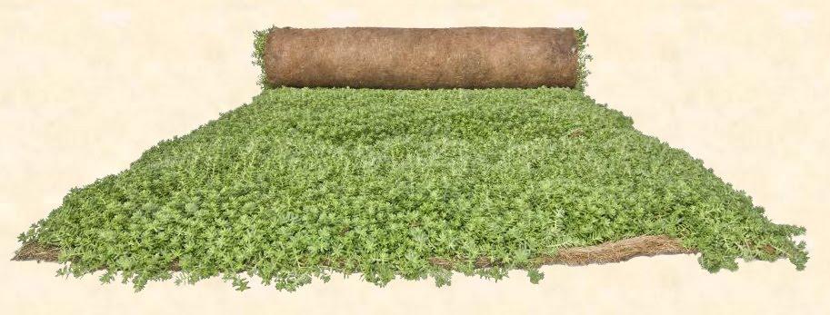 Tepe para cubierta vegetal 1m x 2 40m 95 00 el nou - Cubiertas vegetales para tejados ...