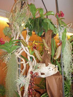 Exposicion orquideas