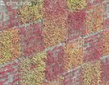 Art culo la hora de los jardines verticales jardines for Caracteristicas de los jardines verticales