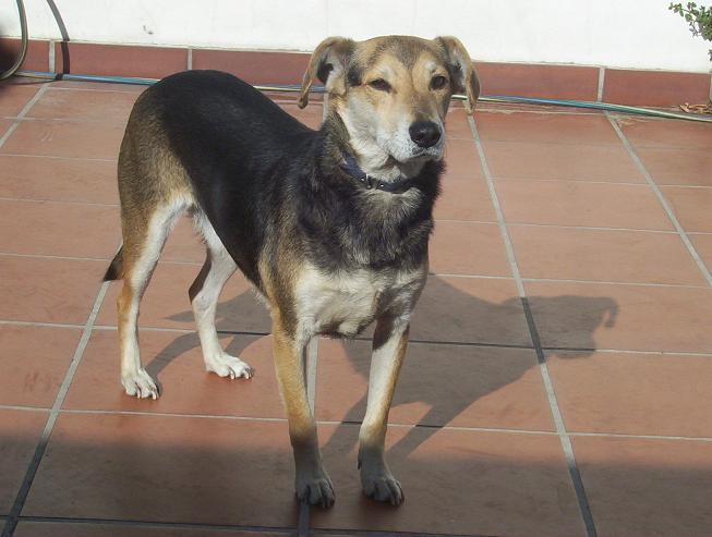 Adoptándonos: Lobita y Gufy, una perra y un perro mestizos en ...