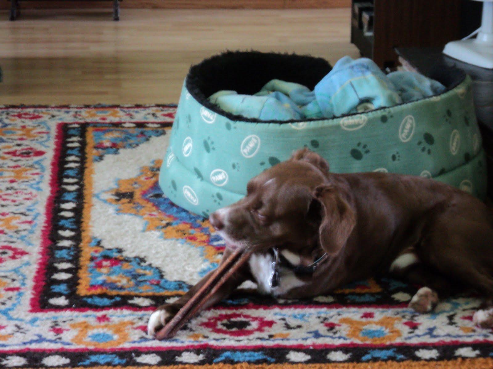 the little brown dog 39 s blog. Black Bedroom Furniture Sets. Home Design Ideas
