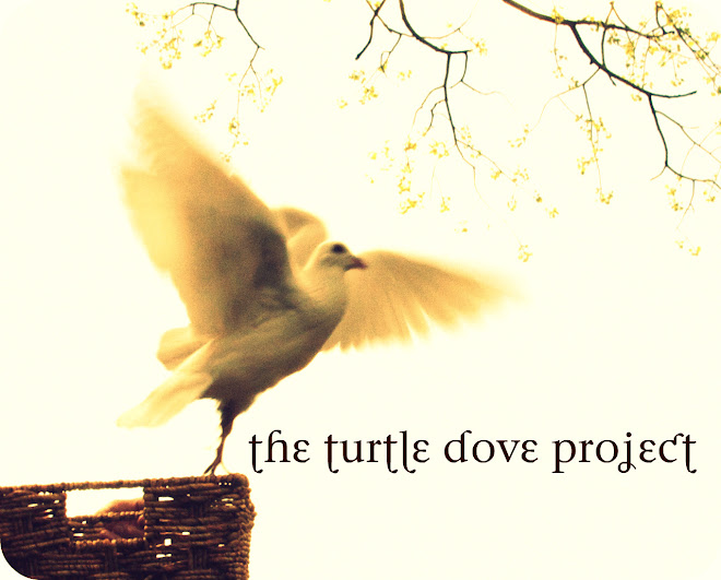The Turtle Dove Project