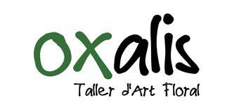 Oxalis Taller d'Art Floral