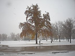 the snowy spring at UNCO, Greeley, Colorado, in 2003