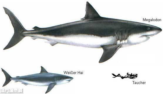 Shark taiwan - Dinosaure marin carnivore ...