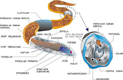 Filum Platyhelminthes Pictures